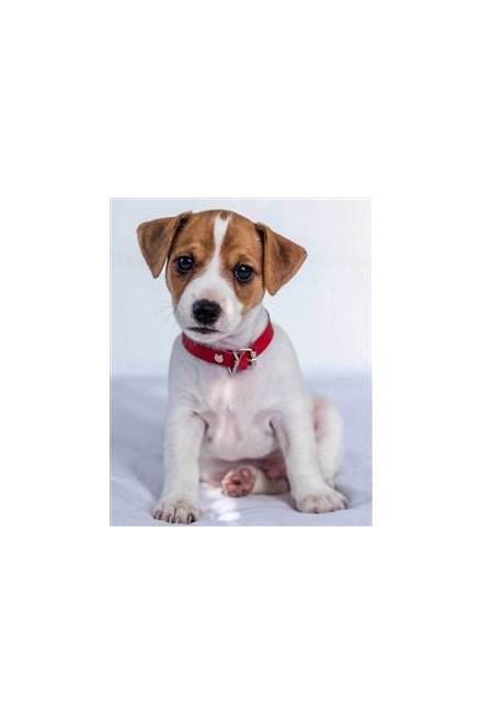 Mikroflanelová dětská deka Jack Russel terrier