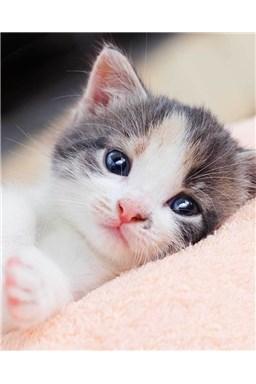 Mikroflanelová dětská deka Koťátko