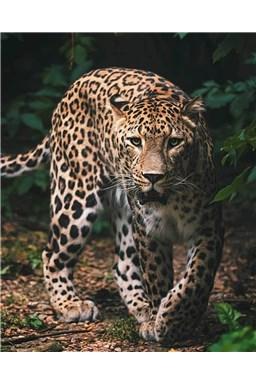 Mikroflanelová dětská deka Leopard green